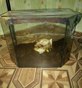 🐌 улитка с аквармумом