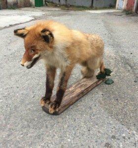 Чучело лисы