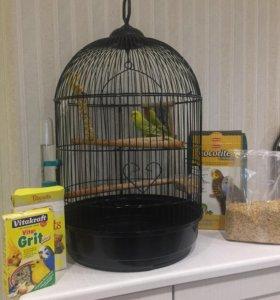 Клетка и попугай в 🎁