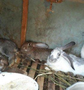 Свежее мясо кролика
