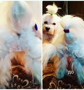 Гигиеническая стрижка взрослых собак и щенков