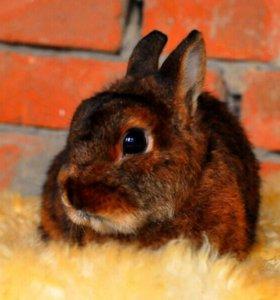 Сатиновая кролька. Шелковая шубка.