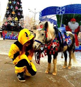 Лошади и пони на праздник