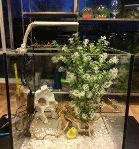 Живые растения , аквариумные рыбки