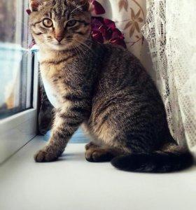 Отдам котят!!!