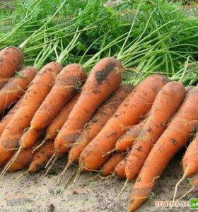 Морковь 15 р за кг