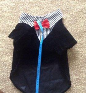 Пиджачок для собачки