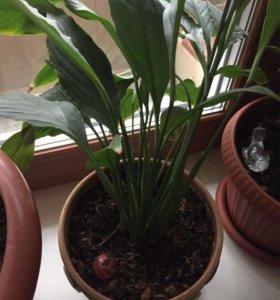 Комнатные растения(4 цветка в горшках)