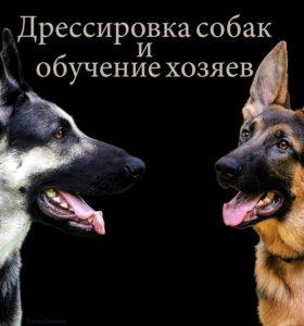 Дрессировка собак и обучение хозяев
