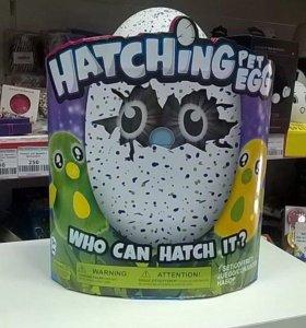 Hatching pet eggs 🥚 🐣