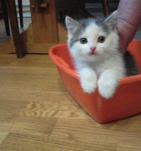 Здоровые котята в добрые руки