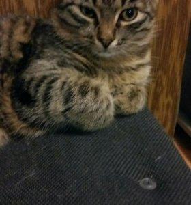 Отдам в хорошие руки,7 месецев кот
