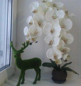 Интерьерная орхидея