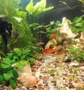 гуппи и расстения из собственного аквариума