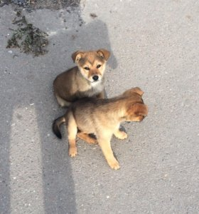 Милый собачки