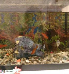 Аквариум + рыбки