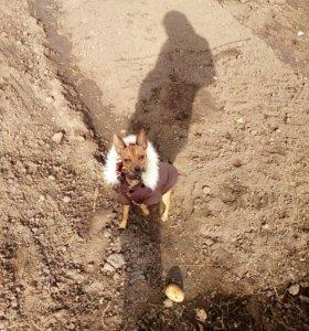 Вязка за щенка