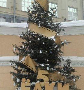 Продажа живых Новогодних елок в Новосибирске