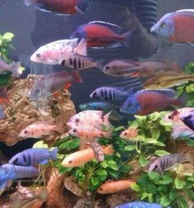 Чистильщик аквариумов