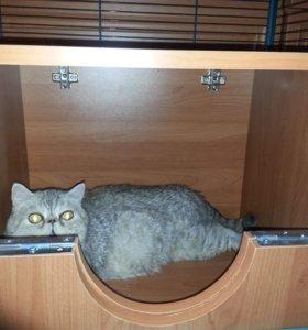 Лучший домик-родилка для кошки или собачки