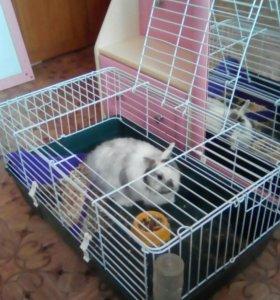 Декоративный кролик с клеткой. Мальчик 1 год.