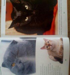 Книга о кошках и котятах