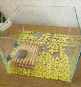 Черепаха с аквариумом.
