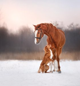 Постой для лошадей и передержка животных