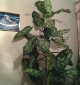 Диффенбахия (комнатное растение)