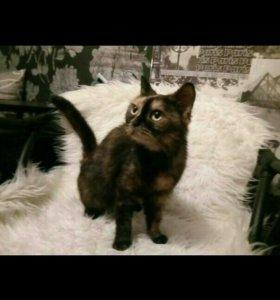 Кошечка Муся