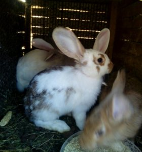 Продают тушьки кроликов