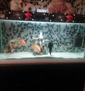 Продам аквариум 450 литров