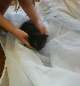 Котята,отдам кошечку в добрые руки