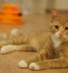 Котик в добрые руки, 10 месяцев