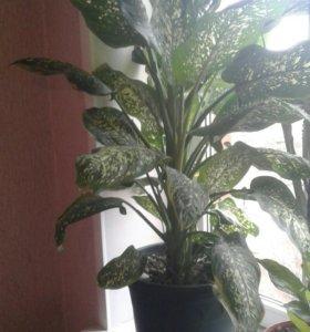 Комнотные растения