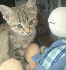 Котёнок от кошки мышеловки