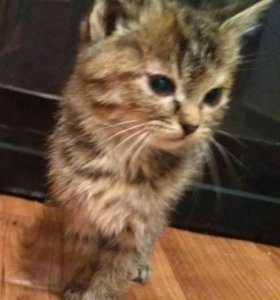 Котята даром, им 3 месяца