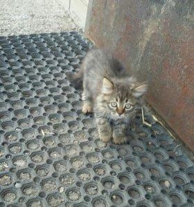 Котята г.Армавир п.Глубокий Бесплатно