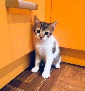 Котик Тима🐈