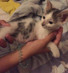 Котёнок Кирюша, уже подросток 5-6 мес