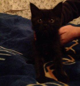 Котята возраст 2-месяца