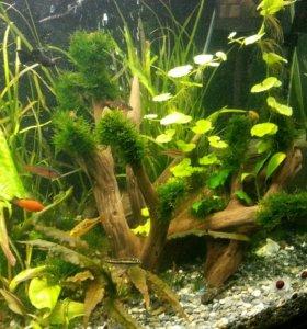 Продам мхи в аквариум