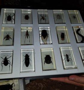 Коллекция насекомых от deagostini