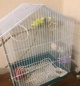 Продам парочку попугаев, вместе с клеткой