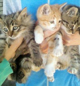 Отдам котят в хорошие руки 3 мальчика