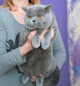Кот на вязки