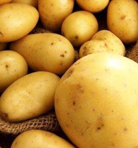 Картофель!!!