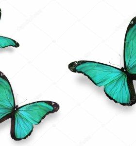 Экзотические Живые Бабочки из Чили гортензия