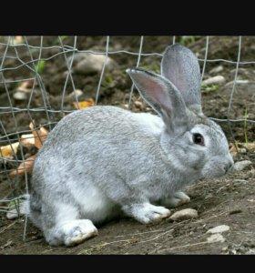 Кролики Нутрии