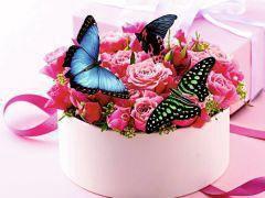 Тропические Живые Бабочки из ЮАР Метистка